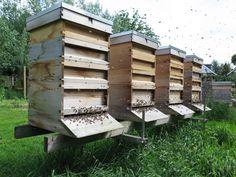 bijen houden   Mag ik bijen houden in mijn tuin? - Bijenclub.com