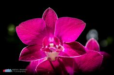 Stefanodav's Shot-Blog: Beauty... #stefanodav #kauai #hawaii #iamnikon #nikonphotography #travel #travelphotography #blogger #beutifulplace #placetovisit #usa #fiore #flower #nature
