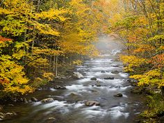 Little River Elkmont Great Smoky Mountains National Park