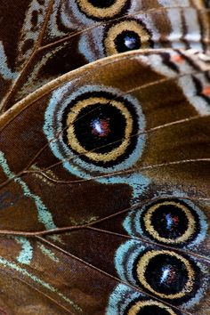 Love the teal highlights on this butterfly wing Butterfly Painting, Butterfly Wings, Butterfly Template, Butterfly Dragon, Monarch Butterfly, Art And Illustration, Patterns In Nature, Textures Patterns, Moth Wings