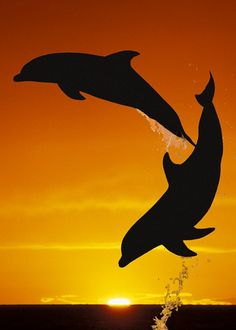 Two playful dolphins leap from the sea near the Bahamas • photo: Doug Perrine / Barcroft Media
