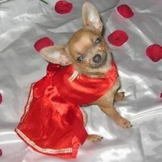 Red Princess Dog Dress on sale for Valentine's Day at www.purecountry.net