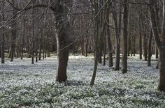 Snowdrops in March Life Magazine, Countryside, March, England, Community, River, Landscape, Plants, Scenery