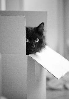 Cat in a box! This is great, so hard to get good pics of cats, and this one has…