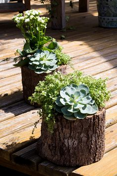 Succulent Gardening, Garden Planters, Planting Succulents, Indoor Garden, Tree Stump Decor, Tree Stump Planter, House Plants Decor, Plant Decor, Garden Yard Ideas