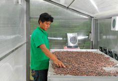 Más de 12 mil pobladores de la región andina sustituyen energía tradicional por energía renovable | Instituto Interamericano de Cooperación para la Agricultura. http://www.iica.int/es/prensa/noticias/m%C3%A1s-de-12-mil-pobladores-de-la-regi%C3%B3n-andina-sustituyen-energ%C3%ADa-tradicional-por