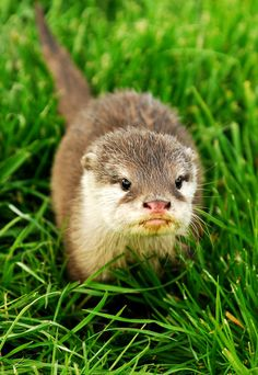 Cute little otter <3