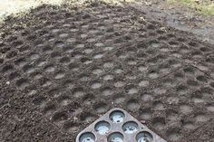 Use your muffin tray to create perfectly spaced holes to plant your seedlings