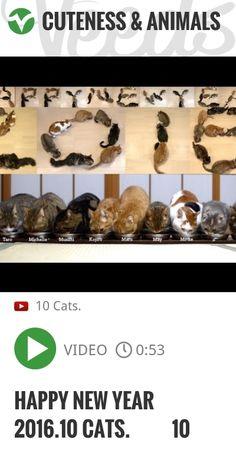 Happy New Year 2016.10 Cats. 文字になる10匹の猫 | http://veeds.com/i/TU1jAInckqnBRW87/cuteness/