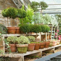 15 Unique and Beautiful Container Garden Ideas-Topiaries-Topiary-Clay Pots Indoor Garden, Garden Pots, Indoor Plants, Outdoor Gardens, Potted Garden, Herb Garden, Potted Plants, Container Plants, Container Gardening