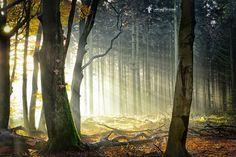 Don't be afraid of the Light by Lars van de Goor