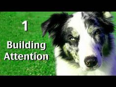 Complete 'how to' free videos on dog training, clicker training and behavior modification by world renowned dog trainer Emily Larlham. Emily uses only Progressive Reinforcement Training. A type of training that involves no forms of physical or psychological intimidation.