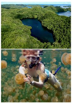 Jellyfish Lake, Palau! Scared of swimming with jellyfish, but think it would be sweet? There is a lake in Palau that is filled with jellyfish who have lost their ability to sting.
