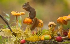 Animals Enjoying and Love Playing Autumn Magic- Pics) Animals And Pets, Baby Animals, Funny Animals, Cute Animals, Autumn Animals, Wild Animals Photography, Photo Animaliere, Forest Friends, Tier Fotos