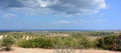 Uliveto panoramico Vendicari