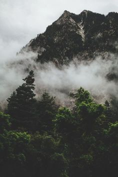 MOUNTAIN TREES FOG