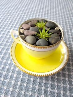 Tea Time  Succulent potted plant in Bone China by ConstantGalore, $21.00