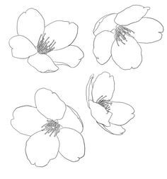 how to draw a bleeding heart flower step by step