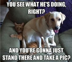 Funny animals With Funny Sayings