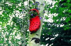 I love this idea...it combines two of my favorite things:  flowers and Crocs!  :)