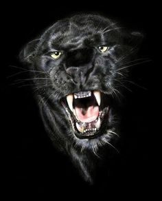 Black beauty. ....