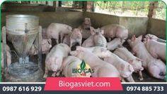 xử lý nước thải chăn nuôi bằng biogas