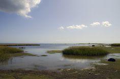 Wetland,_Gotland._Sweden_(6202485931).jpg (JPEG Image, 3785×2534 pixels)