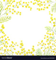 Watercolor mimosa frame vector image on VectorStock Mimosas, Watercolor Plants, Watercolor Paintings, Floral Illustrations, Illustration Art, Mimosa Plant, All Flowers, Water Flowers, Freebies