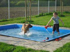 Dog pool in the backyard!! I want one!!