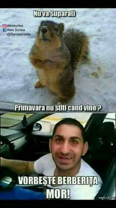 Răspundei mă veveriței și nu te mai mira😂 Funny Quotes, Funny Memes, Jokes, Deadpool, Funny Animals, Haha, My Photos, Funny Pictures, Humor