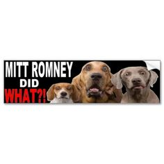 MITT ROMNEY DID WHAT?! BUMPER STICKER