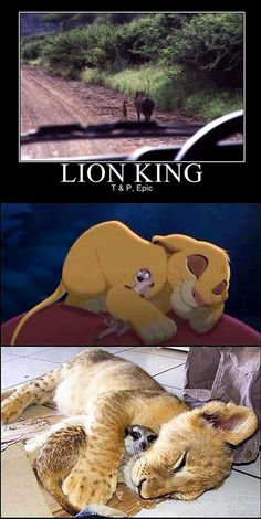 We've rounded up a few examples of Lion King in real life.