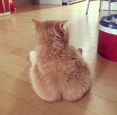 The Cat with Buns