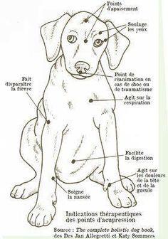 Points d'acu. pour chiens.