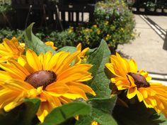 Sunflowers. By Destiny Richards.