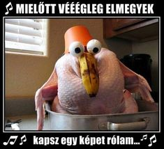 Dump A Day Funny Thanksgiving Pictures - 35 Pics Funny Turkey Pictures, Funny Thanksgiving Pictures, Thanksgiving Turkey, Funny Photos, Funny Turkey Memes, Happy Thanksgiving Memes, Turkey Images, Thanksgiving Blessings, Thanksgiving Wallpaper