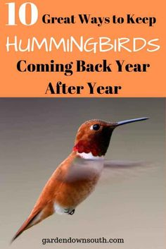 Keep Hummingbirds Coming Back ~ Garden Down South Some of the very basic needs of hummingbirds to attract them. A hummingbird will remember a great location and come back to it every year and most the time, bring along some friends! Hummingbird Nests, Hummingbird Plants, Hummingbird House, Hummingbird Swing, Hummingbird Meaning, Hummingbird Migration, Hummingbird Photos, How To Attract Hummingbirds, How To Attract Birds