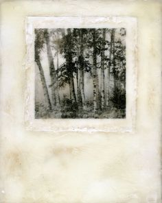 Birches | Vicki Reed | photo encaustic