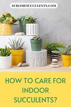 Do you know how to care for indoor succulents? Most succulents are not frost tolerant, so they tend to thrive in the warm environment of your home or office rather than in the frigid outdoors. It's also easy to control your succulents' light and water needs when they're grown indoors. With a little basic succulent care knowledge, your indoor succulent garden will be flourishing before you know it. Check this pin for full details! #succulent #succulentplant #succulentgarden #ind