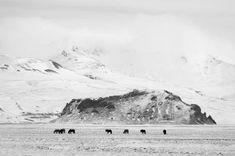 """""""Preeriabiisoni, ylämaannauta ja islanninhevonen esittävät kuvissani jääkautisten arojen kadonnutta megafaunaa, jota luolien seiniin ja kattoihin on niin mestarillisesti maalattu. Niitä kuvatessani etsin jääkautisen metsästäjän mielenmaisemaa. Mietin, miten muinaiset ihmiset kokivat yli tuhatkiloisen alkuhärän läheisyyden. Kuvatessani pyrin yhä useammin irti arkitodellisuudesta. Haluan valokuviini jotain jonka kuvittelen, jotain joka on ehkä joskus ollut."""" – Heikki Willamo Mountains, Travel, Outdoor, Tea, Outdoors, Viajes, Destinations, Traveling, Outdoor Games"""