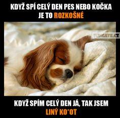 Když spí celý den pes nebo kočka...
