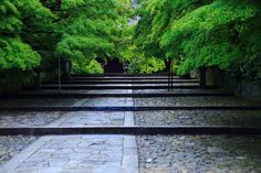 Japan Garden, Photography Gallery, Fresh Green, Kyoto, Asia, Sidewalk, Japanese, Landscape, City