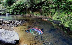 Mystic Ribbons in the stream  Campbells Bush Totara North