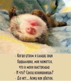 Юмор Russian Quotes, Funny Expressions, Just Smile, Funny Texts, Good Morning, Cute Pictures, Fun Facts, Funny Quotes, Positivity
