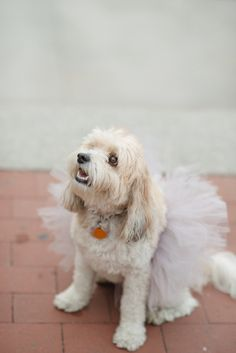 A dog in a tutu! http://www.stylemepretty.com/new-york-weddings/new-york-city/2015/01/13/nyc-engagement-session-4/ | Photography: Rachel Pearlman - http://www.rachelpearlmanphotography.com/