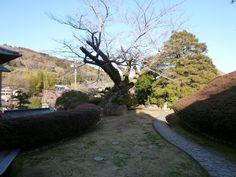 """Giardino di """"Kizuna""""(Hotel), Shuzenji-Onsen(Terme), Izu Shizuoka Japan (Febbraio)"""