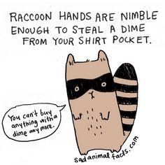 I've got some bad news about raccoons. Sad animal facts .com