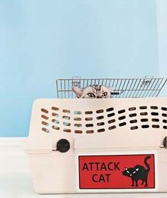 Taking a pet on a road trip? Here's what you need to know.
