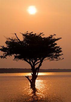 Rio Negro - Manaus, Amazonas (by Gutemberg Ostemberg)