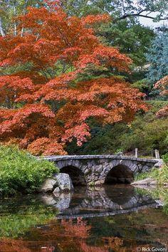 Maymont Japanese garden Richmond, Virginia Japanese Maple trees are beautiful all year  love them